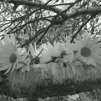 Spring daisy chains