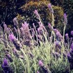flowers-2-henley