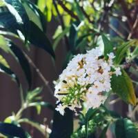 Poem | Floral Prettiness