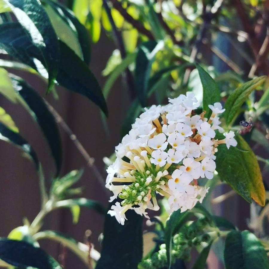 floral-poem